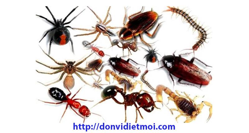 Dịch vụ diệt côn trùng Quảng Ngãi