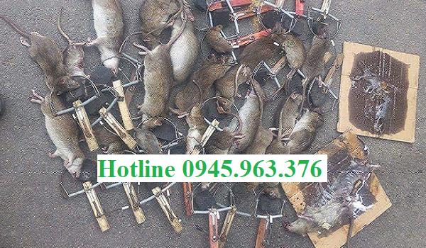 Dịch-vụ-diệt-chuột-tại-Đà-Nẵng