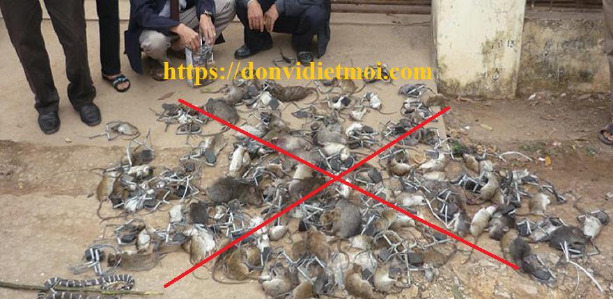 Dịch vụ diệt chuột hiệu quả Quảng Ngãi