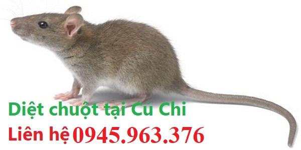 Dịch-vụ-diệt-chuột-tận-gốc-Củ-Chi