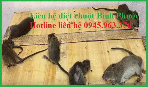 cong-ty-diet-chuot-gia-re-tinh-binh-phuoc