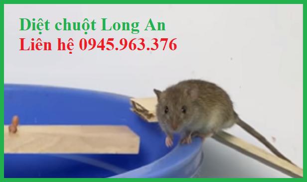 dich-vu-diet-chuot-tinh-long-an