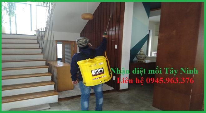 cong-ty-diet-moi-tai-tay-ninh