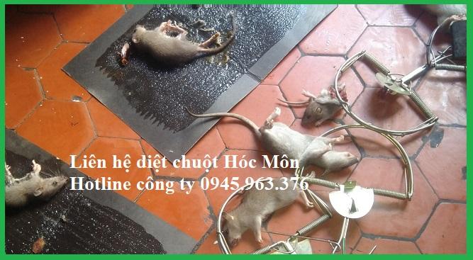 cong-ty-diet-chuot-huyen-hoc-mon