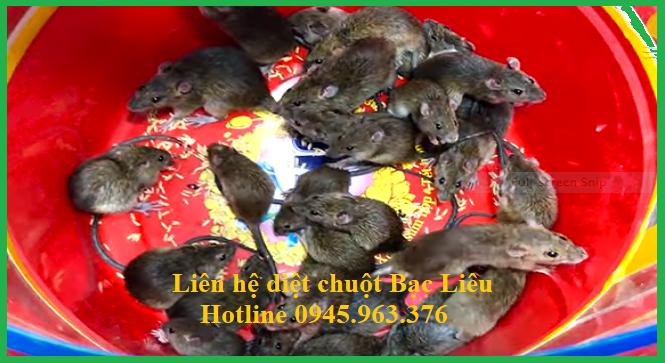 cong-ty-diet-chuot-tai-bac-lieu