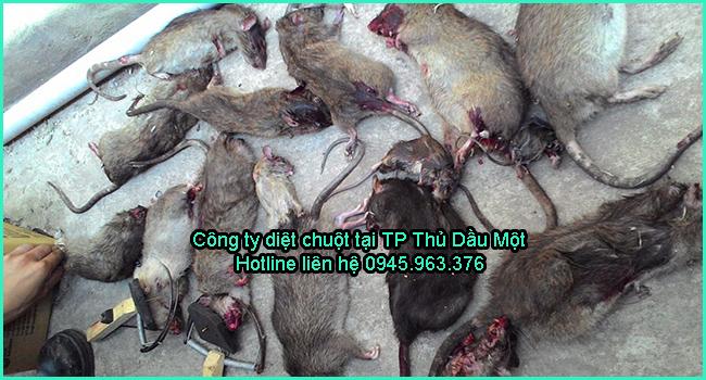 cong-ty-diet-chuot-tai-thu-dau-mot