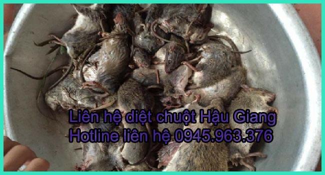 dich-vu-diet-chuot-tinh-hau-giang