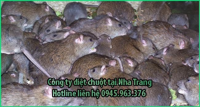 cong-ty-diet-chuot-tai-nha-trang