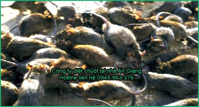 cong-ty-diet-chuot-tinh-an-giang
