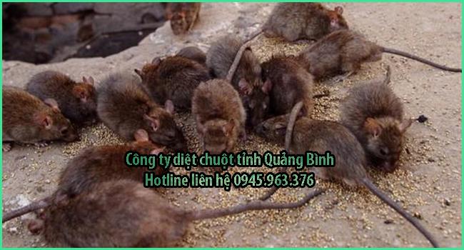 cong-ty-diet-chuot-tinh-quang-binh