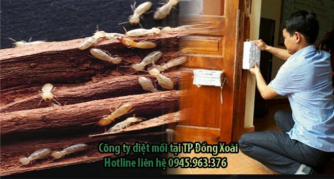 cong-ty-diet-moi-tan-goc-tai-tp-dong-xoai