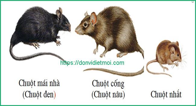 dich-vu-diet-chuot-tai-an-giang