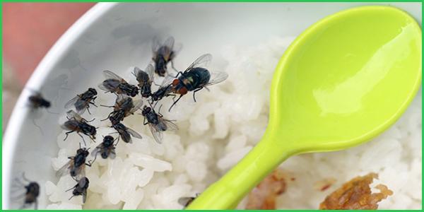 cong-ty-phun-diet-ruoi-tan-goc-o-quang-nam