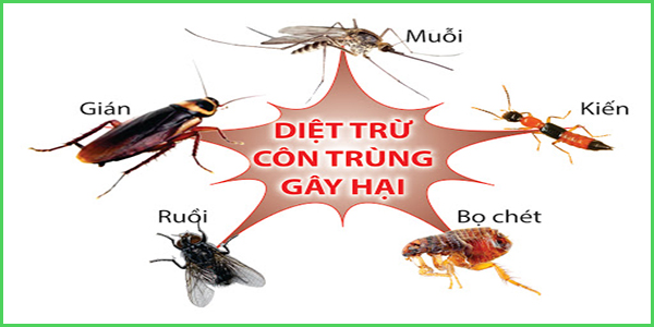 cong-ty-phun-thuoc-diet-con-trung-tot-nhat-o-dien-ban