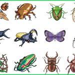 Dịch vụ phun diệt côn trùng tại Lào Cai – Công ty diệt mối Tân Nguyên