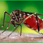 Dịch vụ diệt muỗi huyện Cát Hải – Bán thuốc diệt muỗi côn trùng uy tín