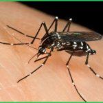 Dịch vụ diệt muỗi tận gốc tại Thủy Nguyên – Bán thuốc phun muỗi uy tín