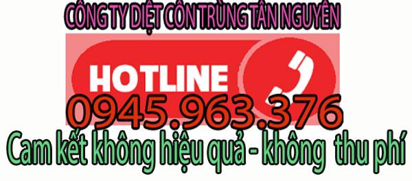 cong-ty-diet-chuot-uy-tin-chuyen-nghiep
