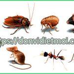 Dịch vụ phun thuốc diệt côn trùng tại Thanh Hóa – Bán thuốc diệt muỗi, mối