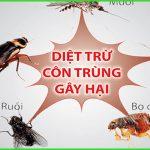 Dịch vụ diệt côn trùng huyện Nhơn Trạch – Bán thuốc diệt mối sinh học