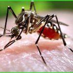 Dịch vụ diệt muỗi huyện Đức Hòa – Bán thuốc nhúng mùng BYT