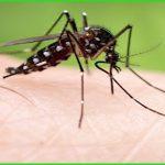 Cách diệt muỗi tại nhà tận gốc an toàn