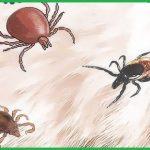 Dịch vụ phun diệt ve chó tại Tiền Giang – Diệt bọ chét, diệt rận, bọ nhảy