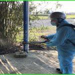 Phun thuốc muỗi tại Tam Kỳ – Dịch vụ diệt mối Tân Nguyên Quảng Nam
