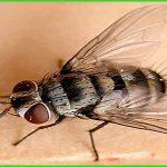 Thành phần thuốc diệt ruồi Rado – Diệt ruồi tận gốc